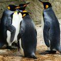 mise à jour pingouin